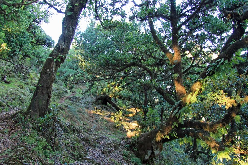 Fanal hike