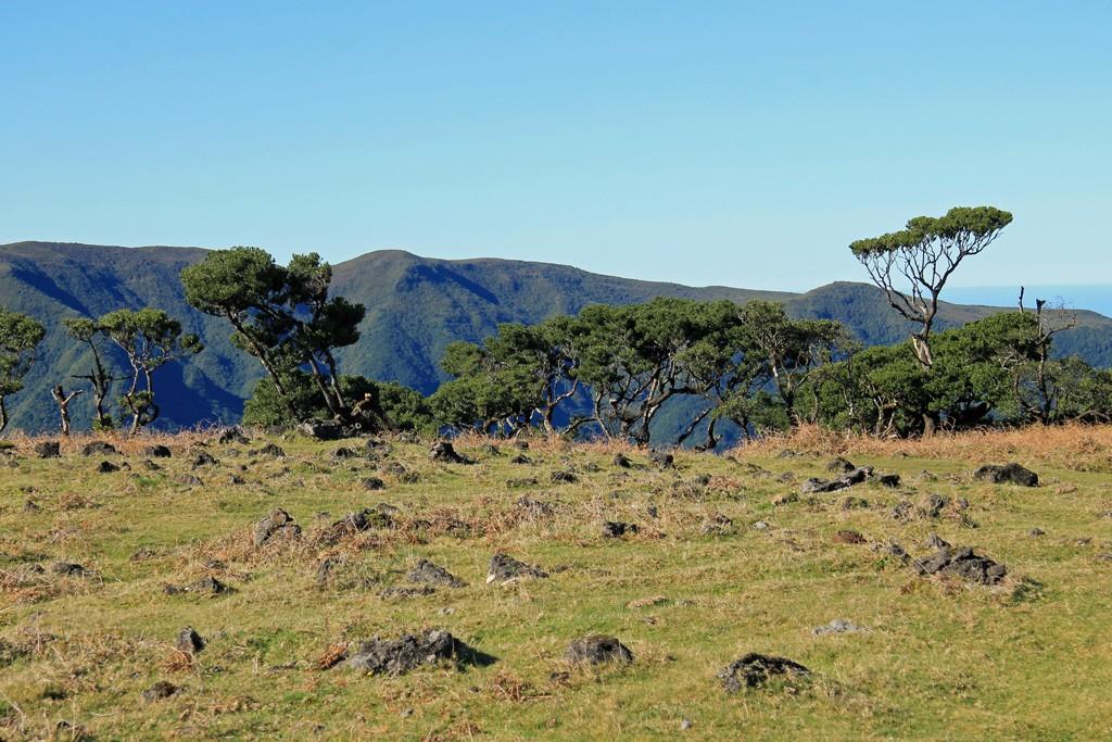 Fanal Madeira hike