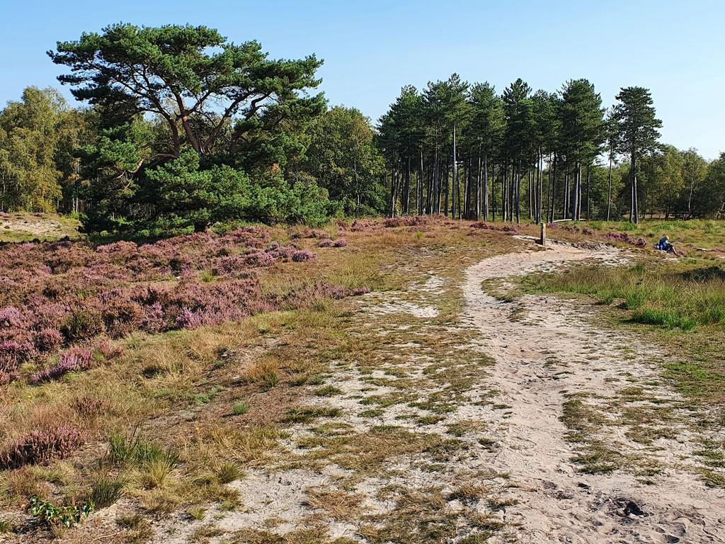 Staartse Heide en Duinen