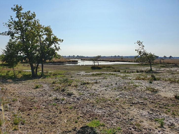 Drielingsvennen Kalmthoutse Heide