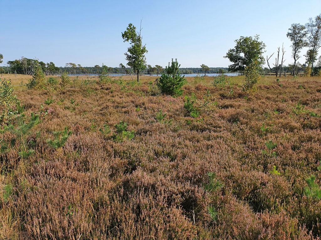 Stappersven Kalmthoutse Heide